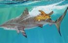 Tiger Sharks